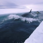 Incredible Antarctica Pictures_1